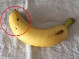 banana_original