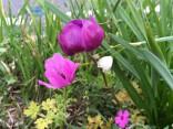 anemone2